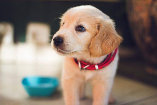 Image principale de l'article Assurer son animal: le meilleur moyen de faire face aux imprévus