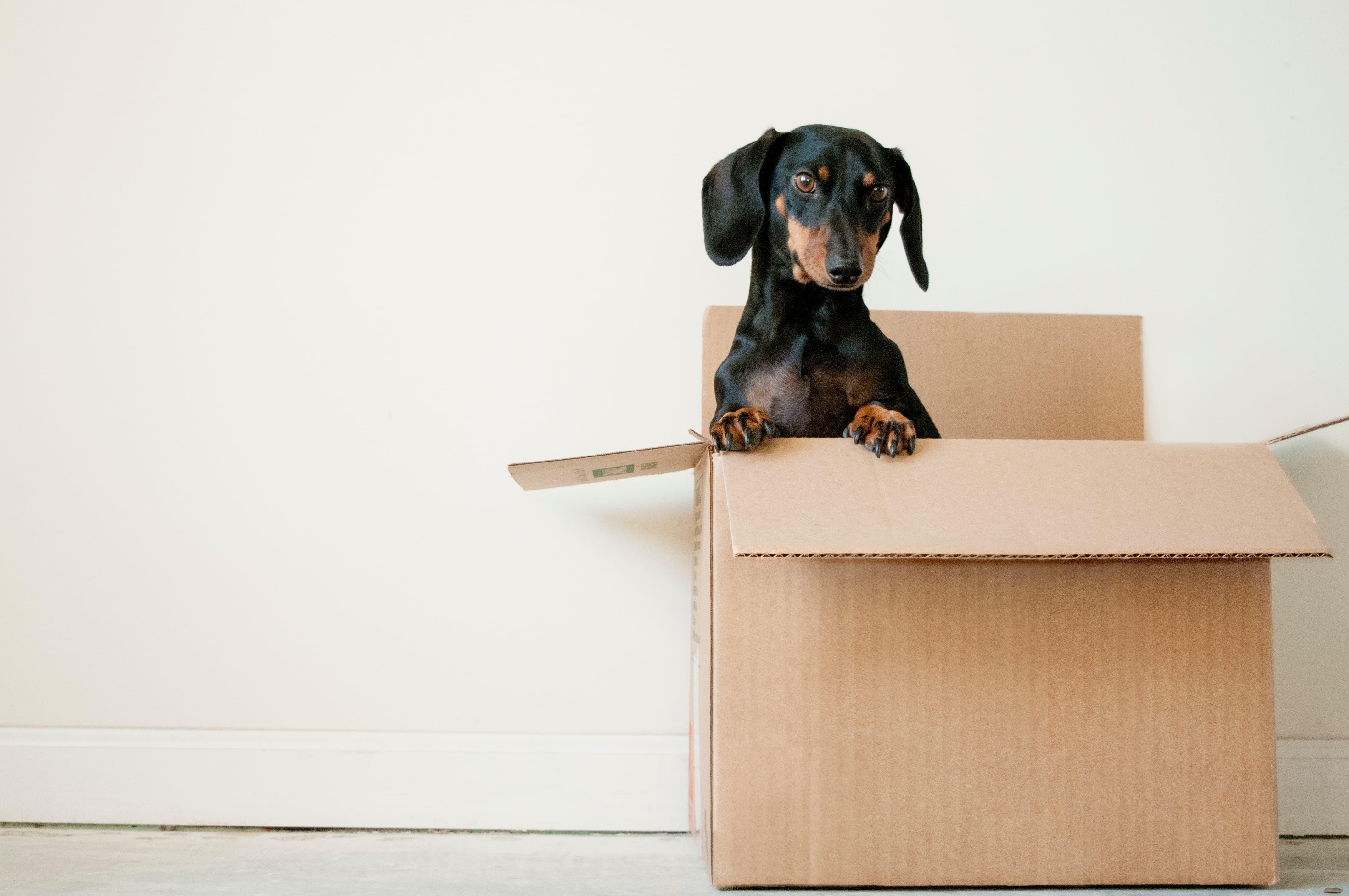 Image principale de l'article Avez vous pensé à déménager?