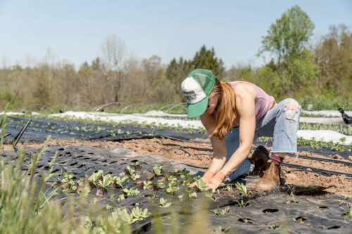 Image principale de l'article Avis Miimosa : Investir dans l'agriculture